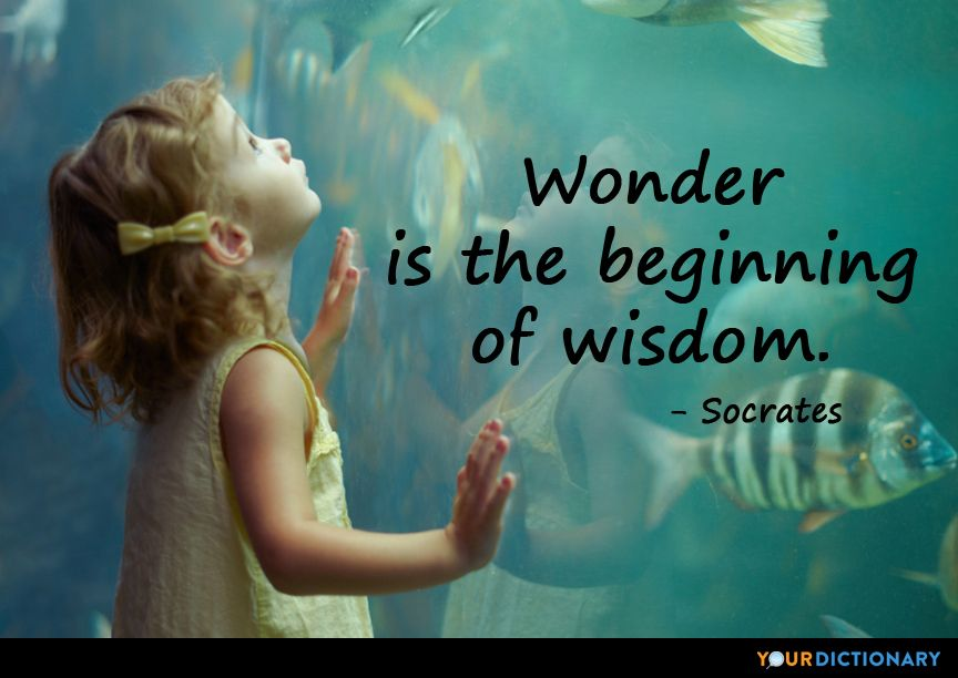 Wonder is the beginning of wisdom. | Wonder quotes ...