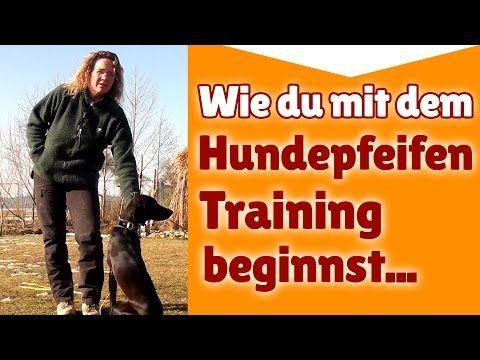 Hundepfeife Training ► Wie du mit dem Hundepfeifen Training beginnst ► Hundetraining Tipps - YouTube