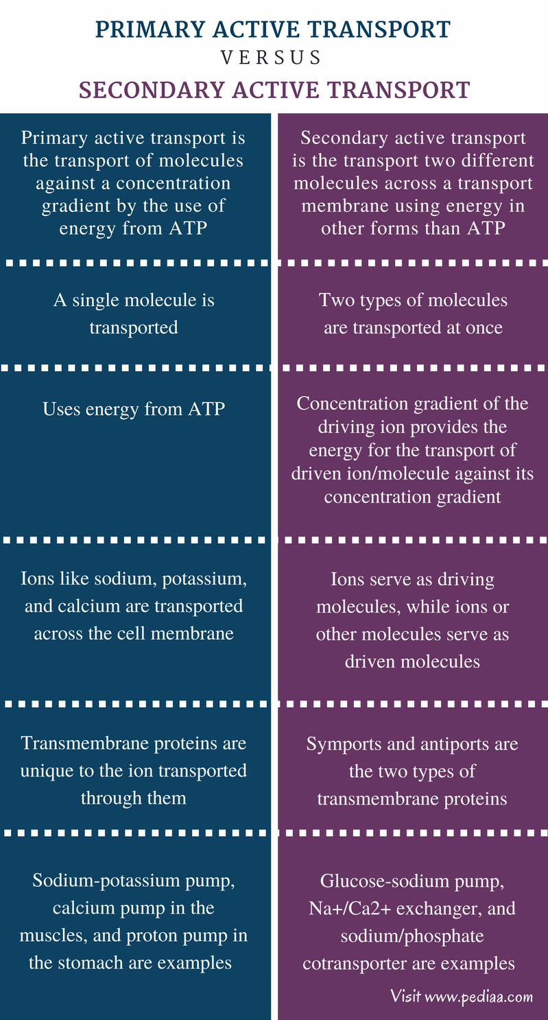 Difference Between Primary And Secondary Active Transport Definition Types Character Active Transport Basic Anatomy And Physiology Active Transport Biology