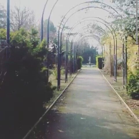 They never said it would be easy #the #never #said #it #would #be #easy #garden #feed #poort #walking #find #alone #depressed #outside #air #birds