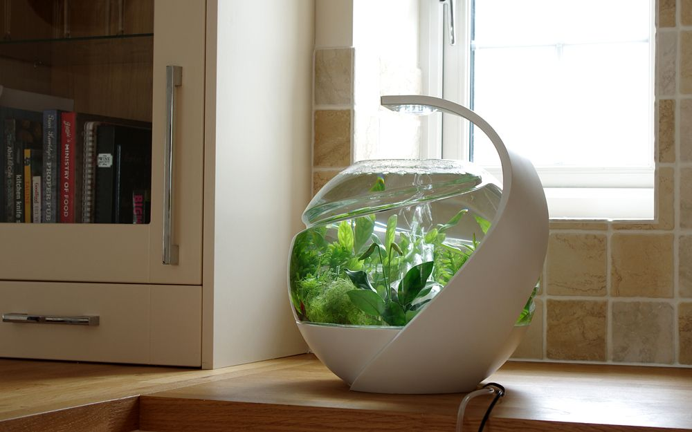 Avo selfcleaning fish tank by susan shelley cleaning