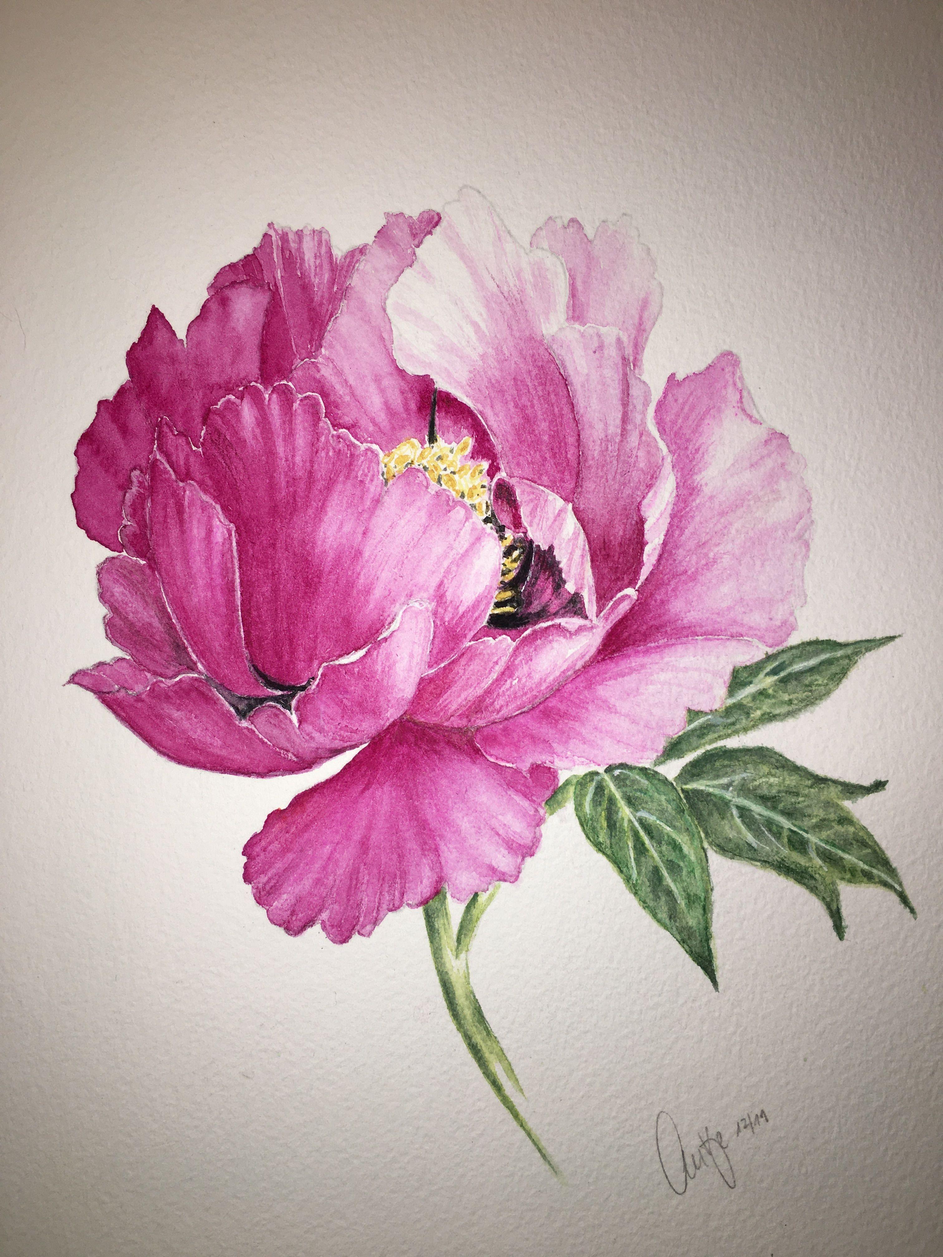 Aquarell Pfingstrosen Bouquet Auf Weissem Hintergrund Hand Bemalt