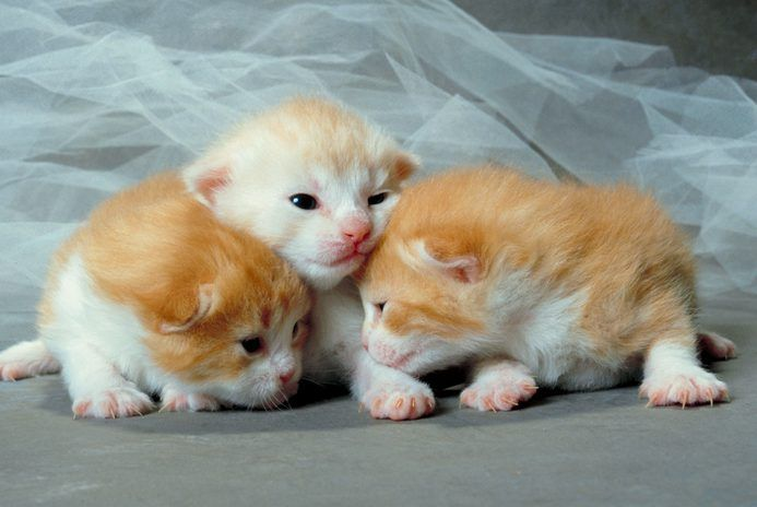 What Does a 4WeekOld Kitten Eat? Newborn kittens, Cat