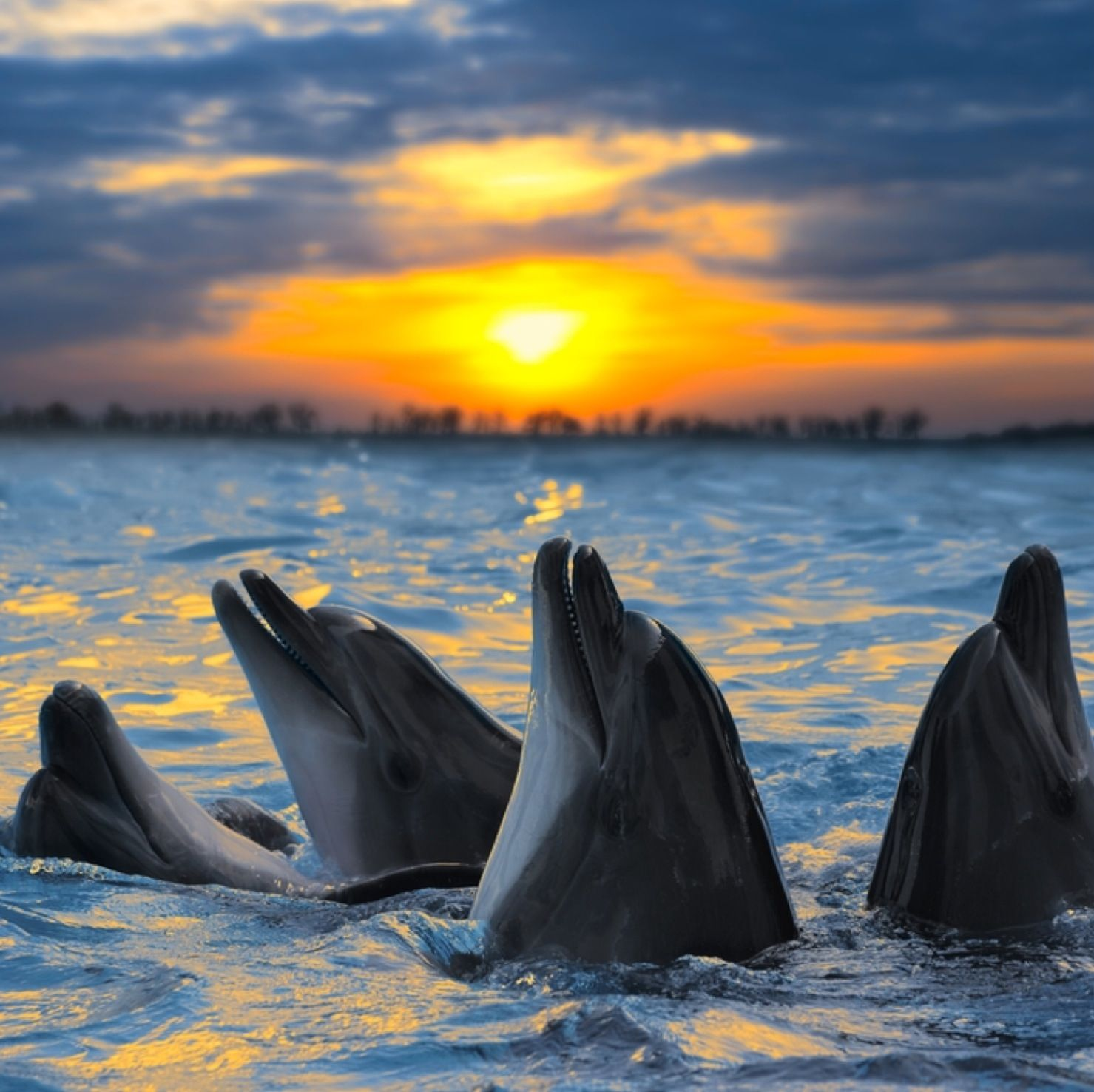 Dolphins Sunset Ocean animals, Dolphins, Animals