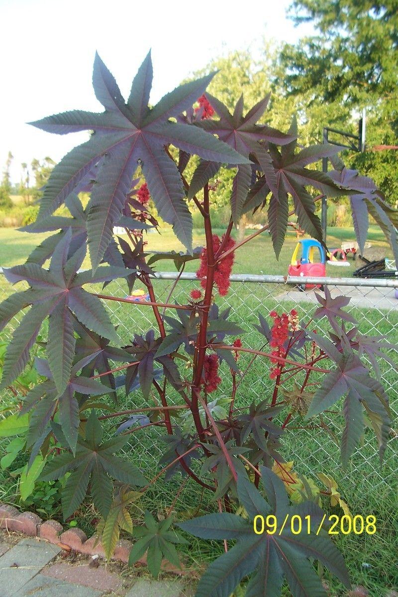 Pin Op Garden Poinsonous Plants