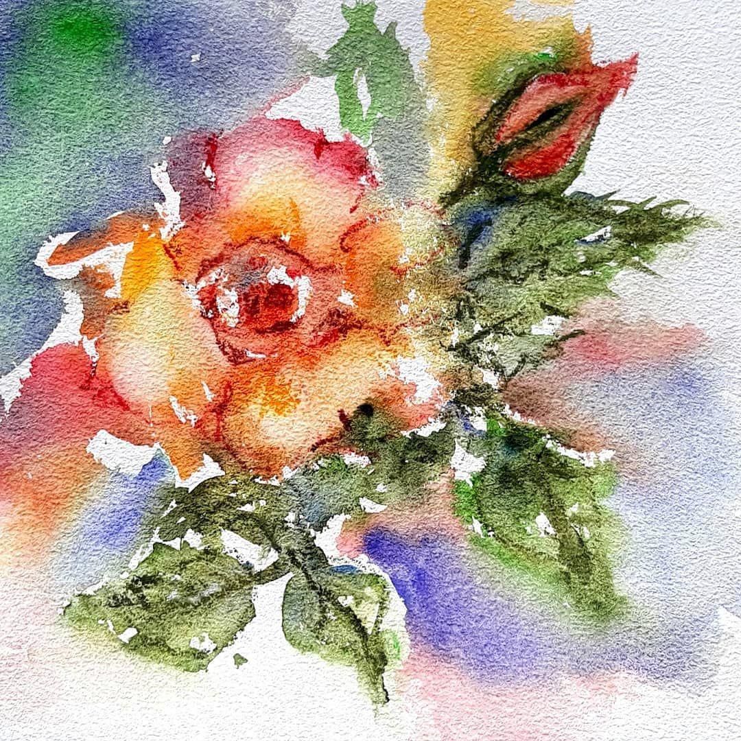 "Patricia Mirabile on Instagram: ""Rose & Bud (watercolour) . . . . #watercolor#watercolour#flowerart #floralart#watercolorartist#botanist #impressionist#aquarello#acuarela…"""