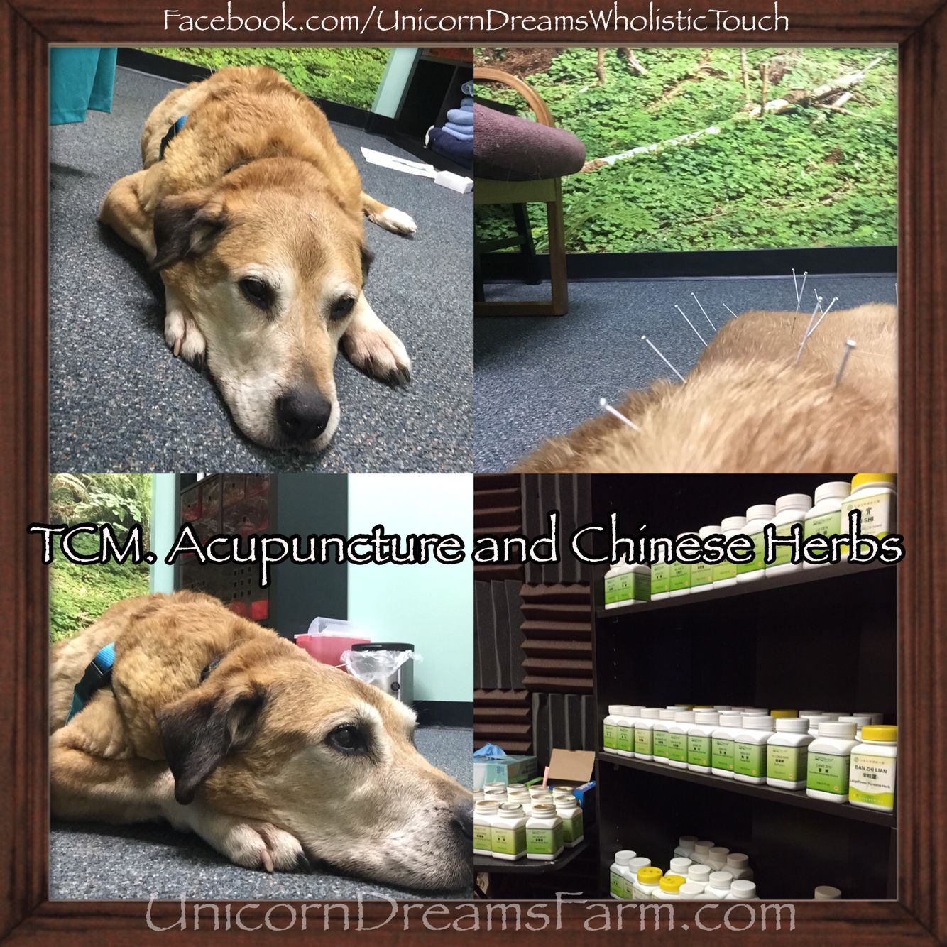 Chinese dog herbal therapy - Bentley Went To Holistic Veterinary Healing Where He Received Acupuncture Ozone Therapy And B12
