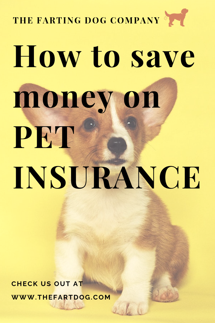 How To Save Money On Pet Insurance Pet Insurance Reviews Pets Pet Insurance