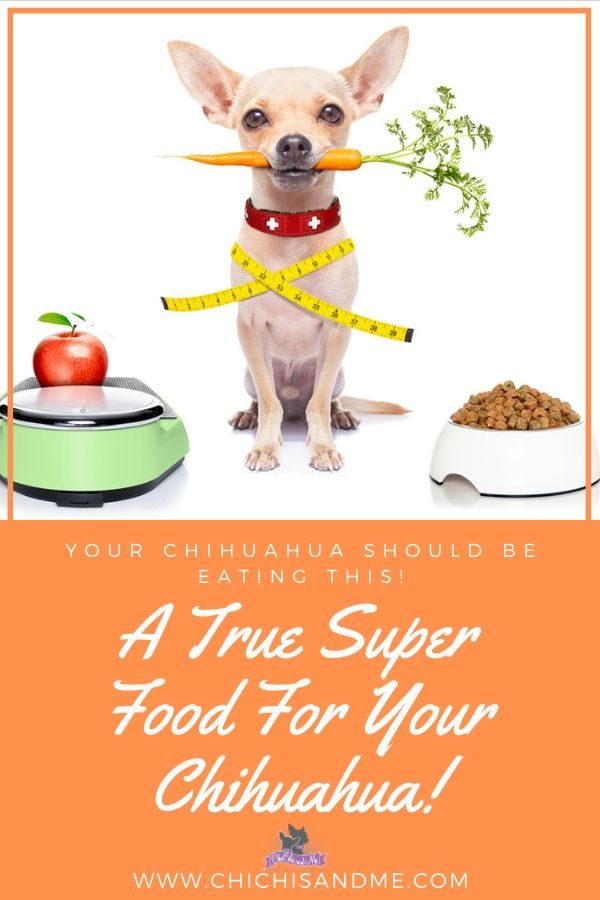 Title You Won T Believe What Is In It Chihuahua Dog Food