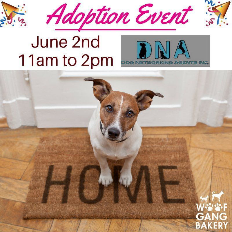 Join Us For Our Next Adoption Event This Saturday From 11am 2pm