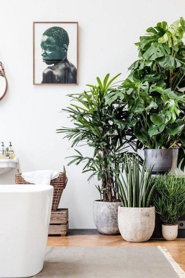 simple house plants indoor decor ideas homedecoration homedecorideas homedecor plantsindoor also rh pinterest