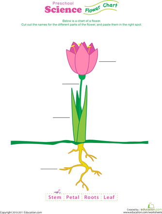 Complete a Flower Fill-In!   Worksheets, Activities and School