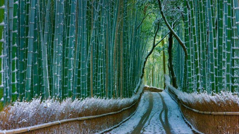 10 Lições Incríveis do Bambu