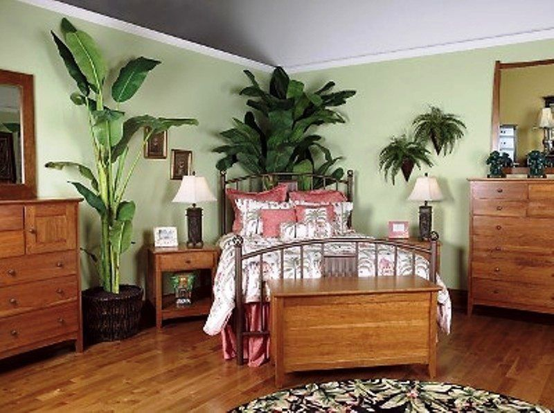 Plantas de Interior - Tipos, cuidados y fotos - EspacioHogar.com ...