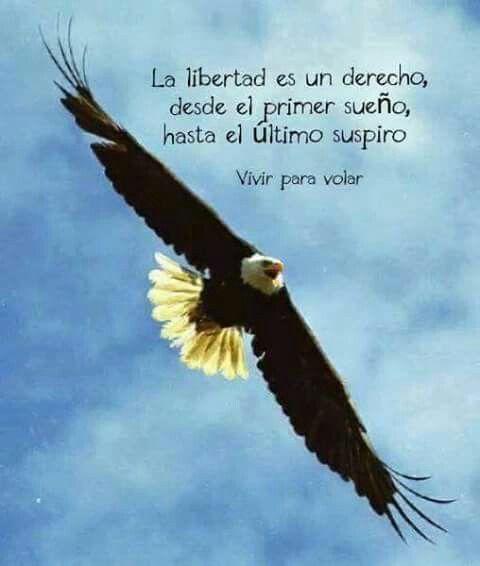 Vivir Para Volar Libertad Frases Pensamientos Para El
