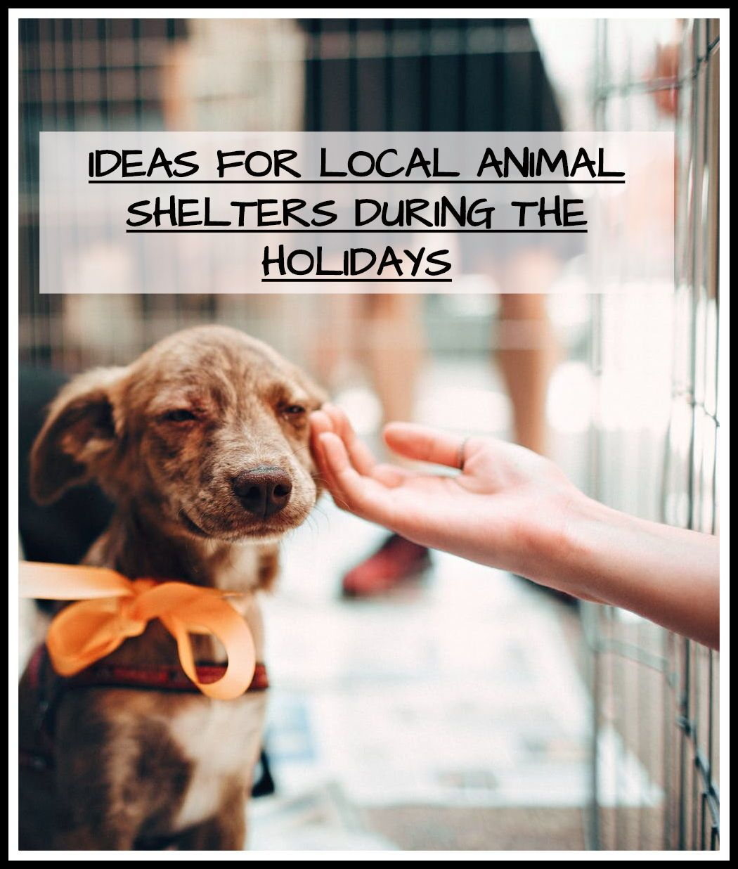 Guest Blog Ideas For Local Animal Shelters During The Holidays Animal Shelter Puppy Dog Pictures Homeless Pets