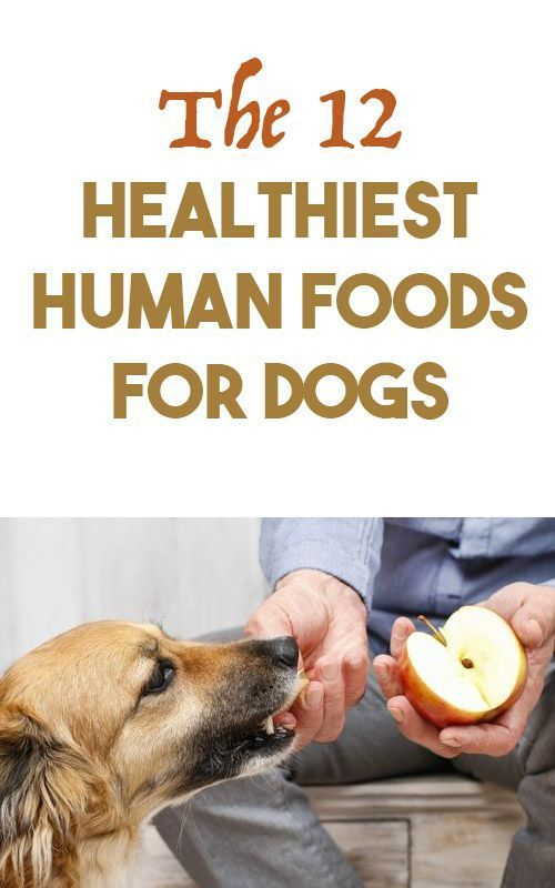 12 Healthiest Human Foods For Dogs Human Food For Dogs Foods