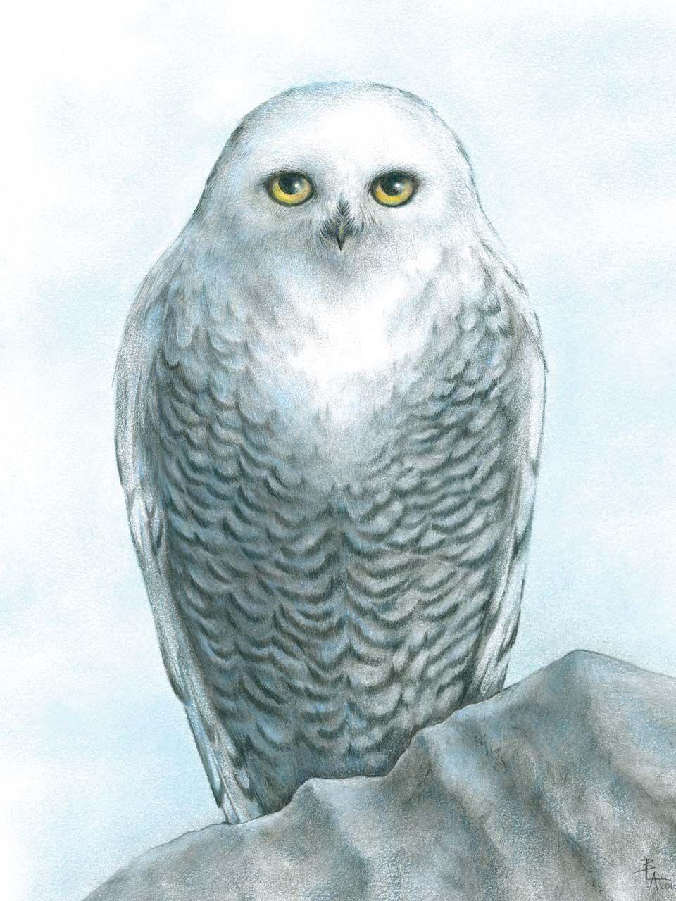snowy owl tattoo tina u0027s tattoo snowy owl snow owl tattoos