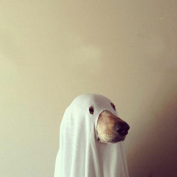 die beste Einstellung Vielzahl von Designs und Farben am modischsten Halloween Kostüme für Haustiere angebracht | awwwwwww stuff ...