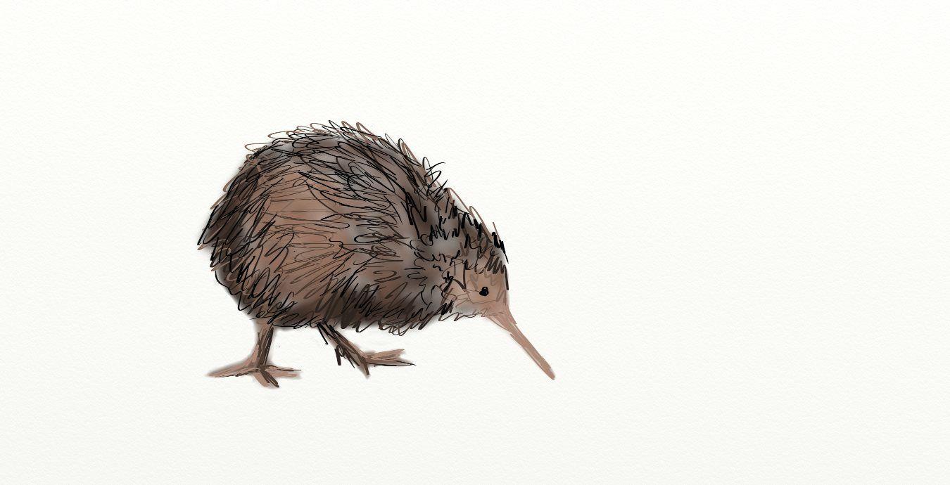 Kiwi Bird It S So Fun To Draw Kelly Stranberg My Drawings In