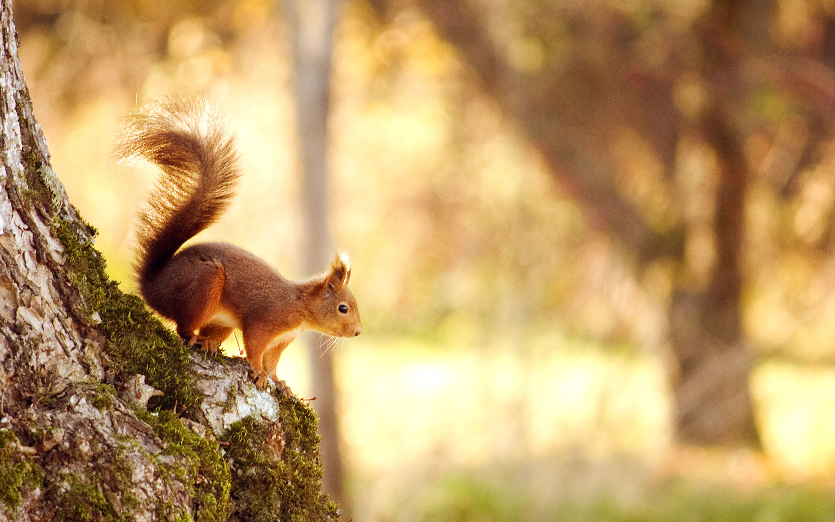 Right Before Winter Optimised For The Retina Display 2880 X 1800 Autumn Animals Animal Wallpaper Cute Squirrel