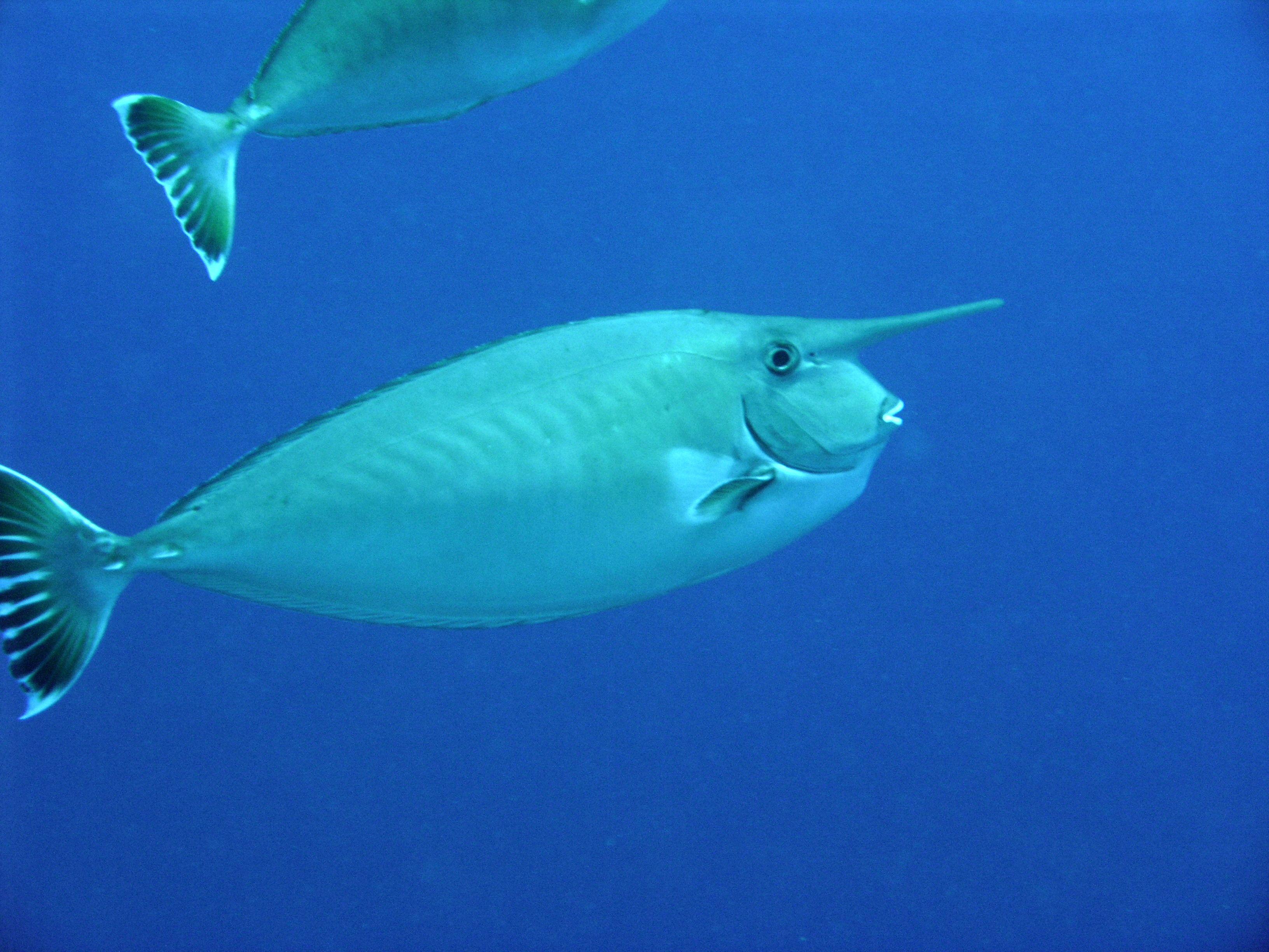 21 best triggers images on pinterest aquarium under the sea and