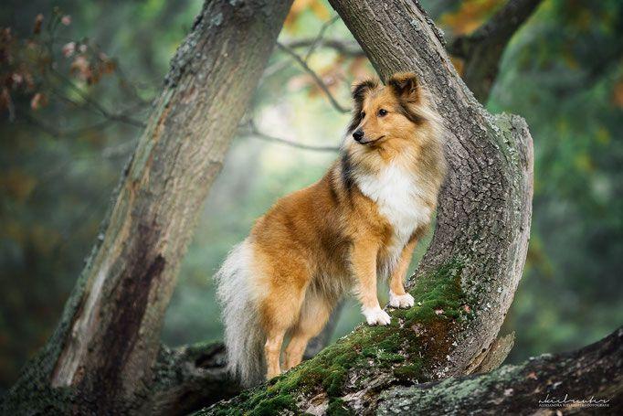 Hundefotografie Tipps Tricks Hundefotografie Tierfotografie Hunde Fotos