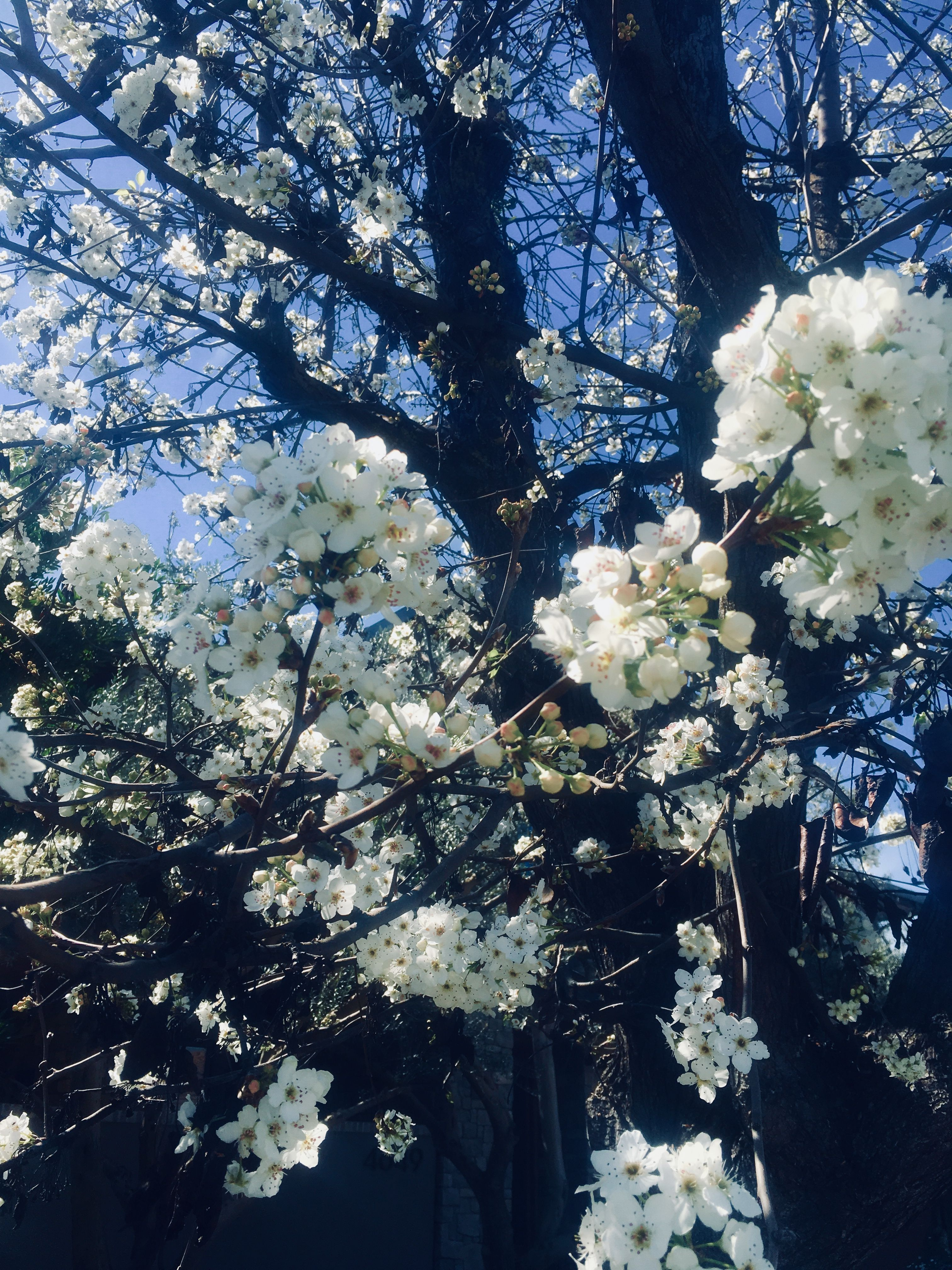 Bloom trees at home Outdoor, Bloom, Clouds