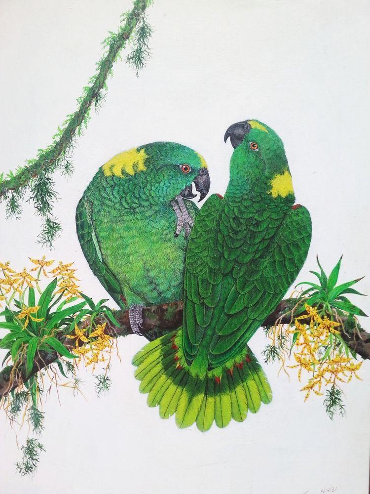 On ebay right now My Yellownaped Amazon Parrots