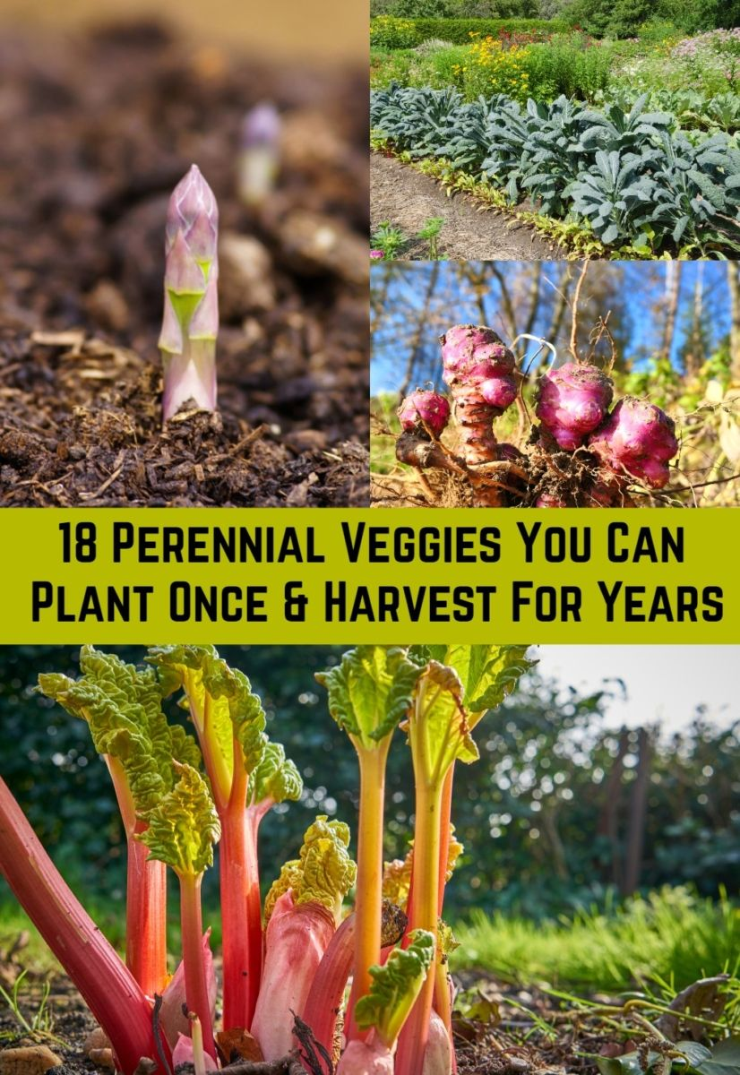 18 Perennial Veggies You Can Plant Once and Harvest For Years is part of Veggie garden, Vegetable garden raised beds, Veg garden, Perennial vegetables, Plants, Garden veggies - Plant these perennial vegetables (and fruits and herbs) just once and you can enjoy their bounty year after year  sometimes for decades!
