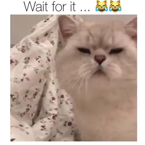 Wait for it .. #hilariousanimals
