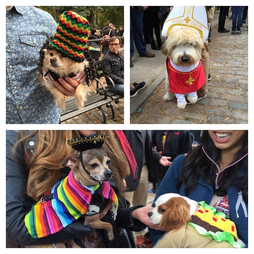 Canine Halloween Costume Parade #pope #hotdog #reggae #bobmarley #mexican # costume # dog #halloween #fun by spoonsnyc & Canine Halloween Costume Parade #pope #hotdog #reggae #bobmarley ...