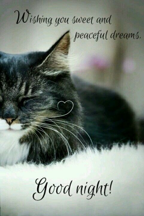 Night Cat Productions: Posts, Good Night And 3