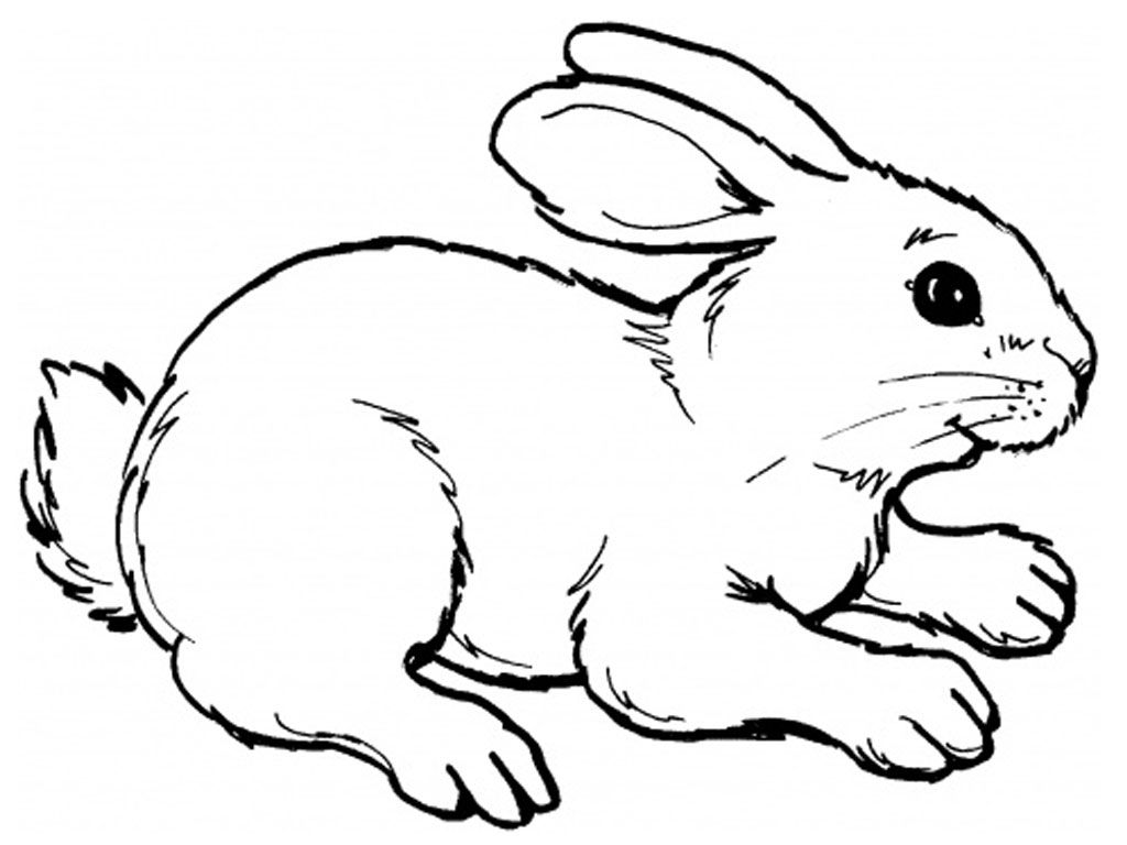 Printable Line Drawings Of Animals : Realistic rabbit coloring pages printable