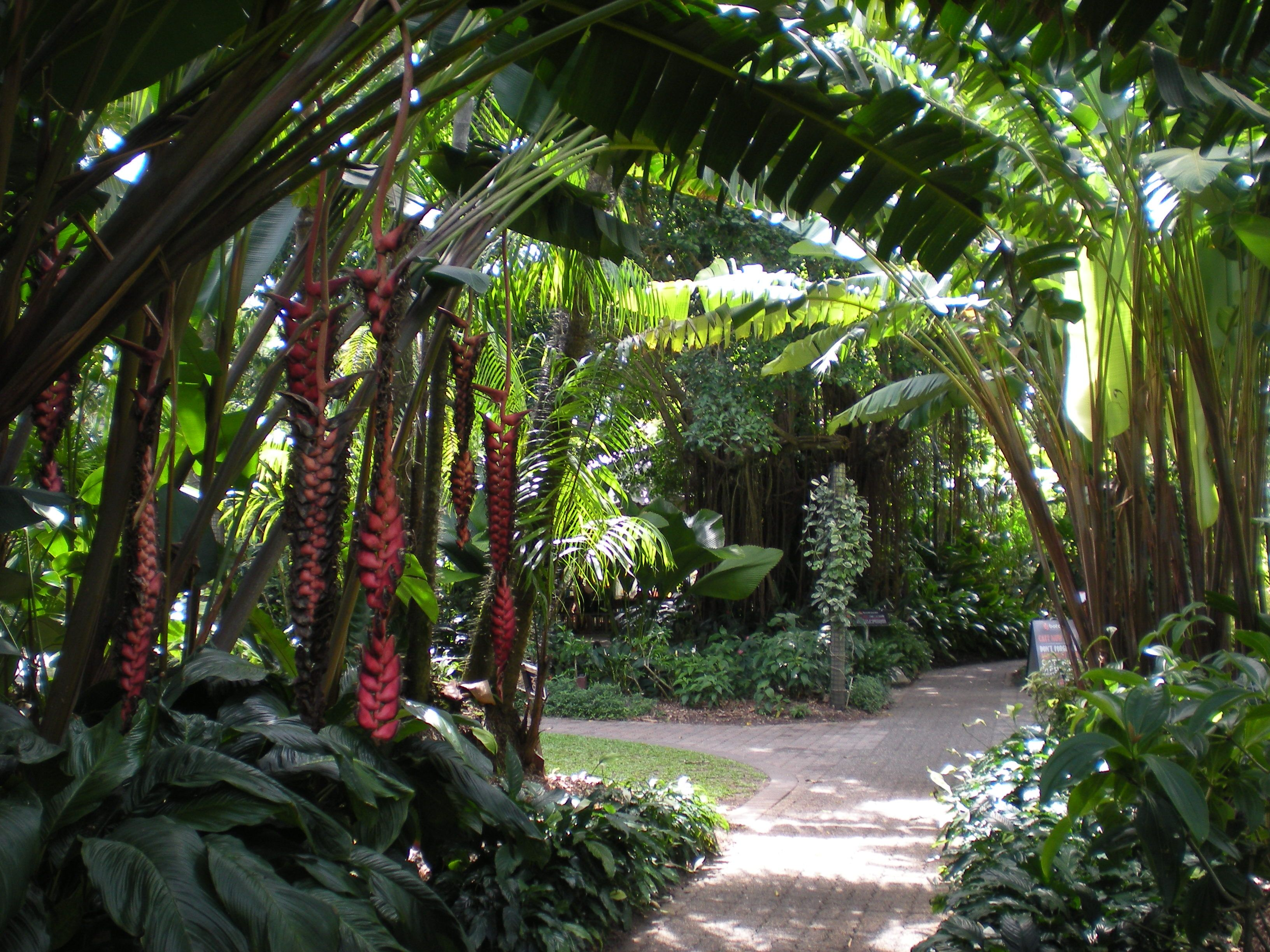 CAIRNS Botanical Gardens North Queensland Australia  Plants