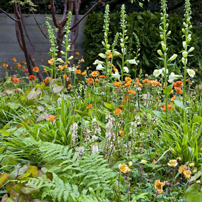 Ruth Willmott - CHELSEA FLOWER SHOW 2012 - The APCO garden / Size garden: 5m L x 4m W / The garden received a silver medal. Photos: Marianne Majerus