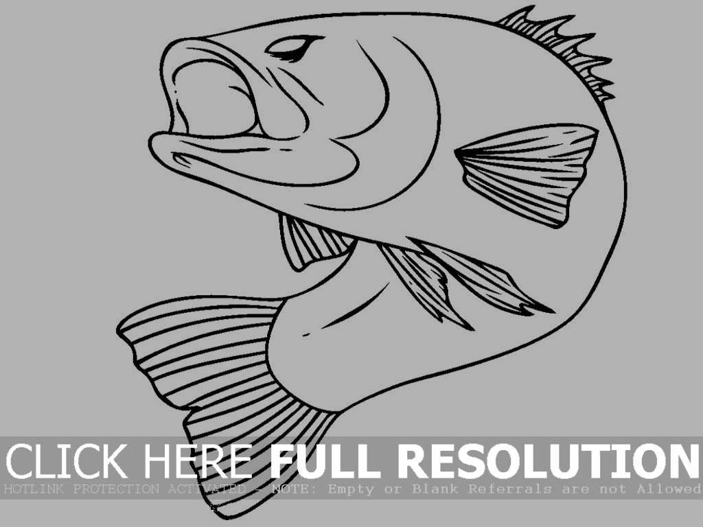 Bass Fish Realistic Coloring Picture For Kids Fish Coloring Page