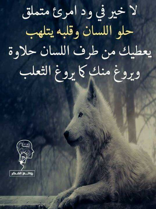 Pin By Waet Waet On كلمات من هنا وهناك Proverbs Quotes Queen Quotes Islamic Inspirational Quotes