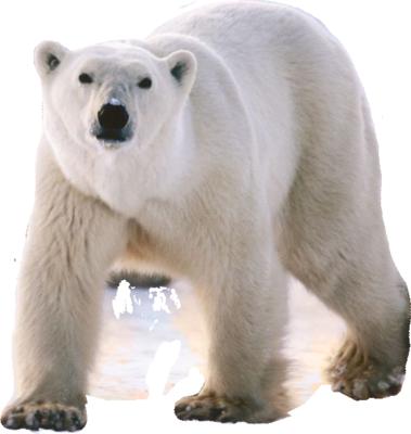 Bear Polar Png By Cendredelune On Deviantart Polar Bear Bear Animated Animals
