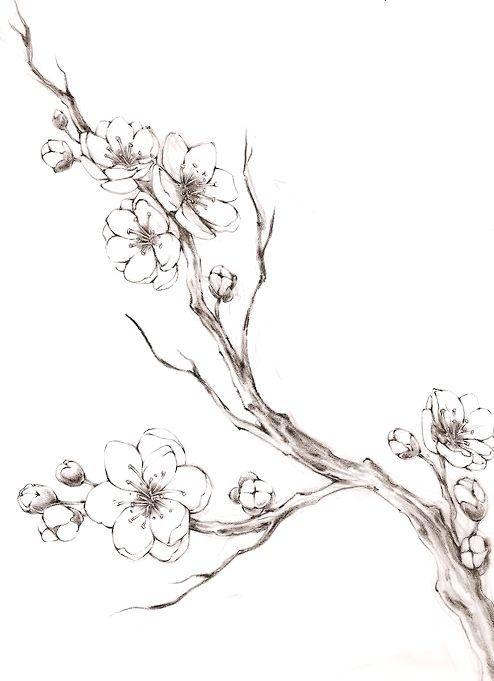 Sakura Cherry Blossom Drawing Blossom Tree Tattoo Tree Branch Tattoo