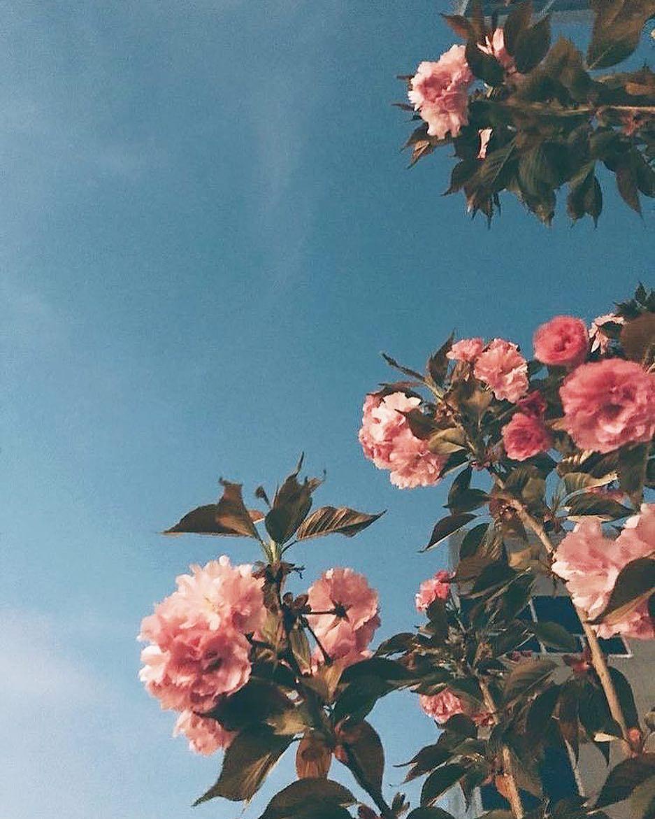 Gambar Mungkin Berisi Bunga Langit Tanaman Alam Dan Luar Ruangan Flower Aesthetic Aesthetic Wallpapers Aesthetic Backgrounds