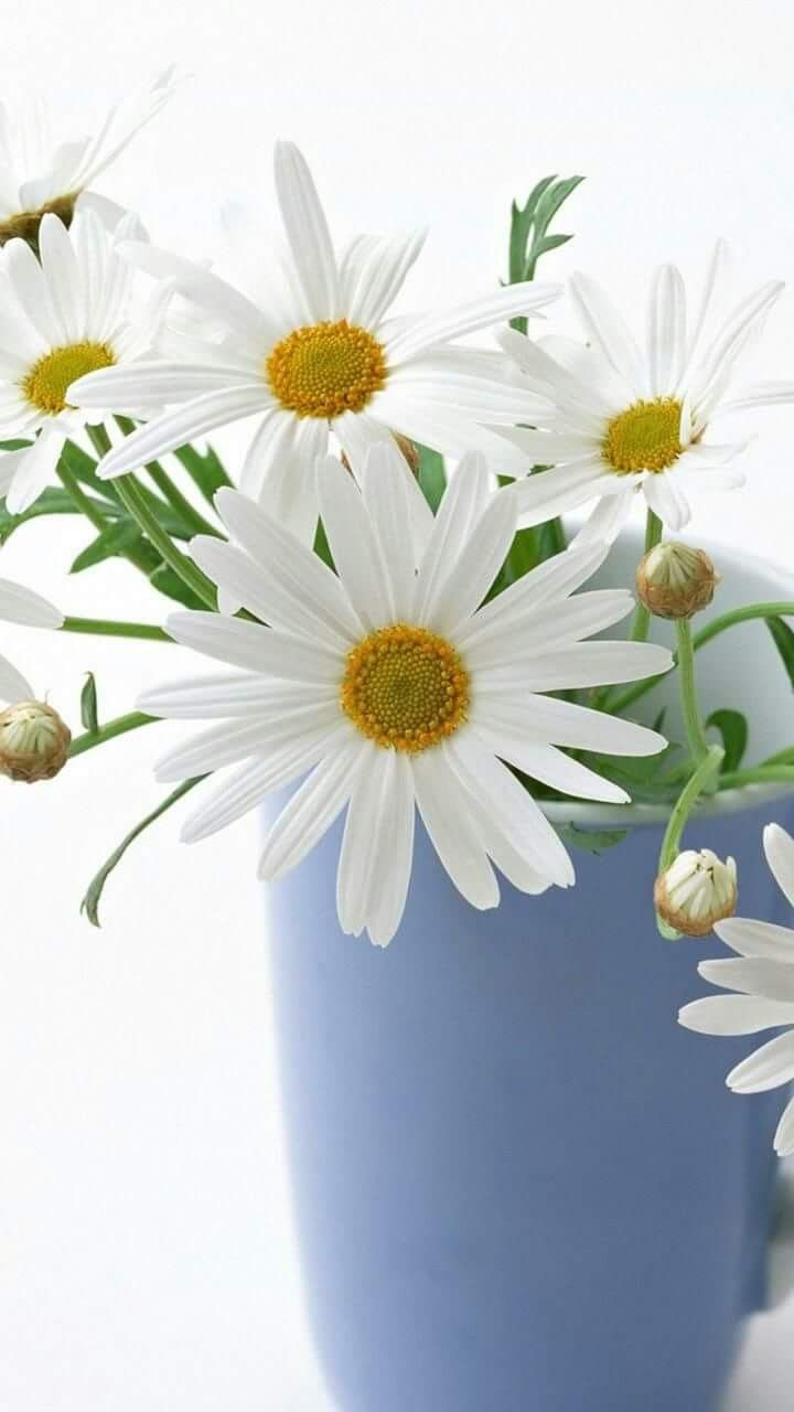 Daisies for you aprils birth flower the birthday board daisies for you aprils birth flower izmirmasajfo