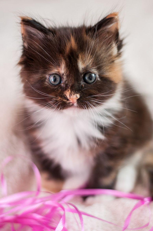 The fuzziest kitten.