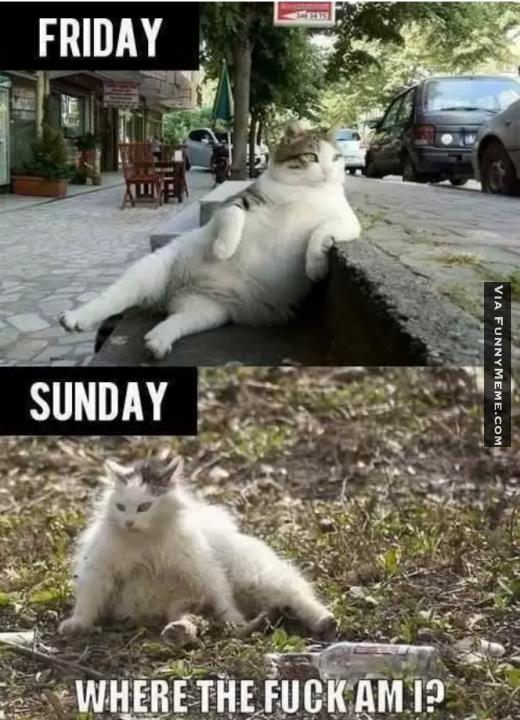 90808520ddf2290353bf7a5031701b1b friday animal meme (16) cute animals meems pinterest meme