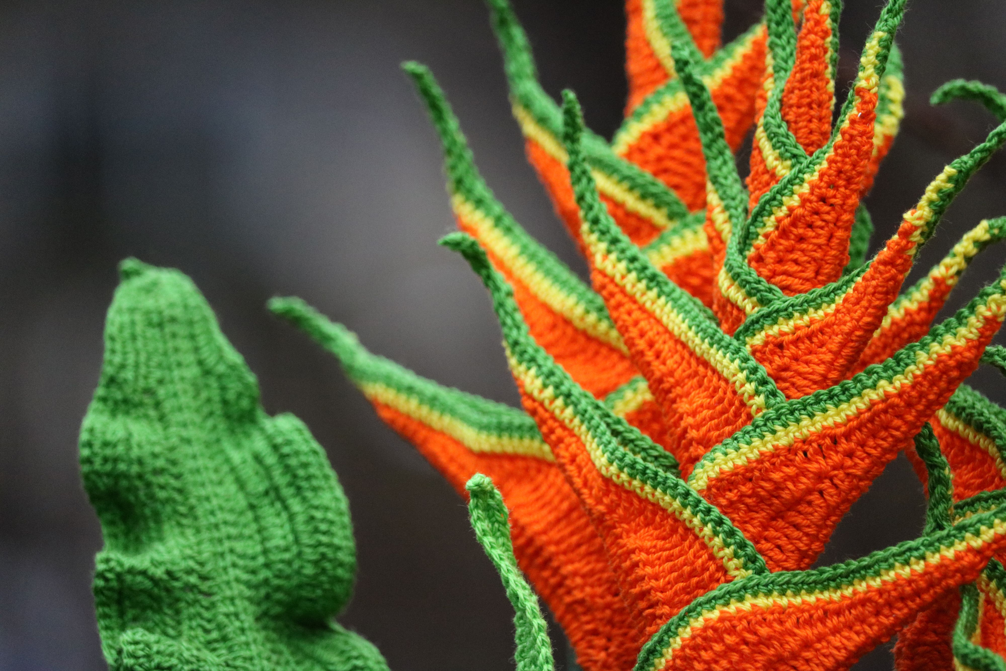 Crochet the tropic and capture their strong contrasting colors.