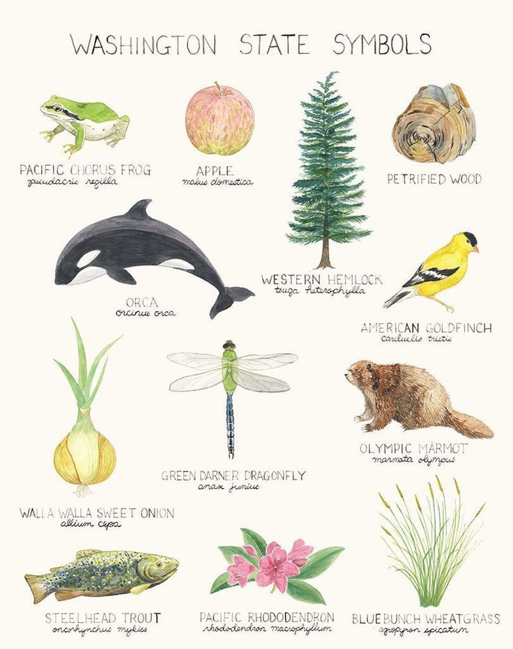 Washington State Symbols Art Print / Washington State Art / State Symbols Art / Pacific Northwest Ar