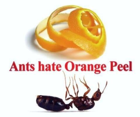 Homestead Survivalist: Seven Organic And natural Pest Control Methods That Work
