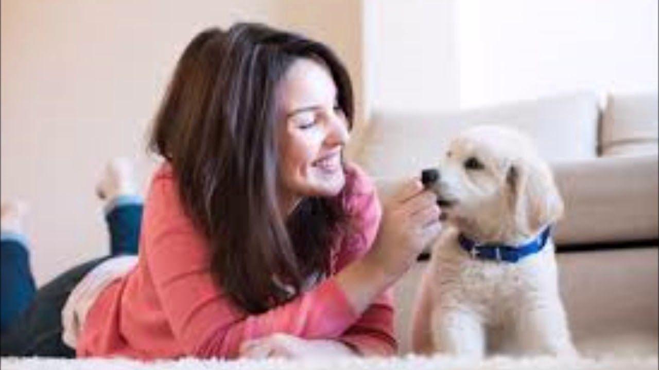 Craigslist Brownsville Mcallen Pets