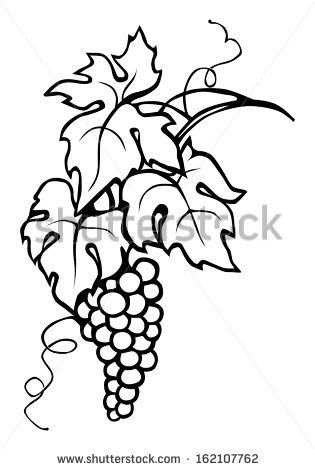 Grape Vine Leaves Grape Drawing Grape Vines Leaf Drawing