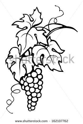 Grape Vine Leaves Grape Drawing Grape Vines Leaf Drawing